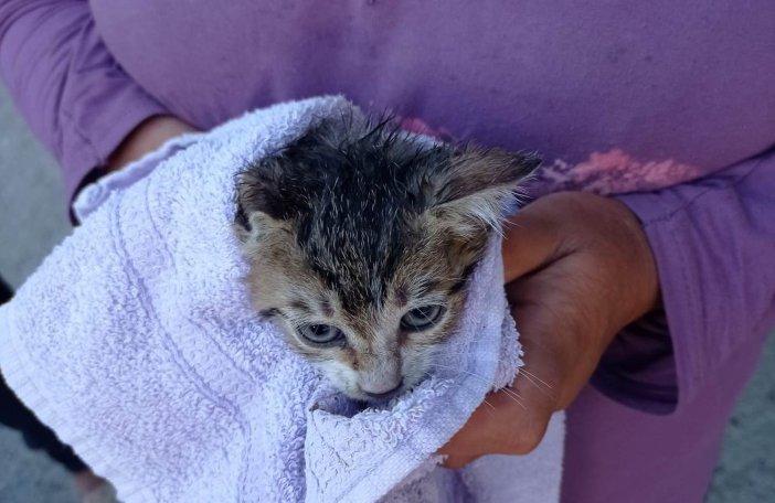 Kuyuya Düşen Kediyi İtfaiye Kurtardı