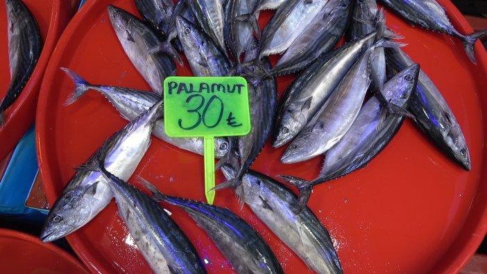 rize-palamut-1.jpg