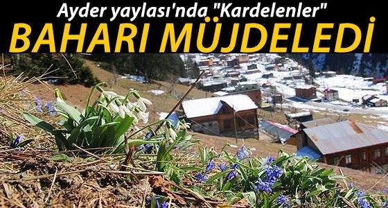 Ayder Yaylas�'nda Muhete�em G�r�nt�